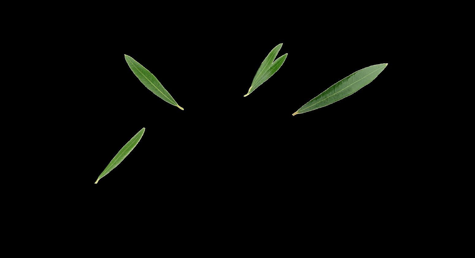 azena-slide-2